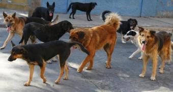 Άλυτο πρόβλημα τα αδέσποτα σκυλιά στη Βέροια!